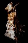 tim burton,gée,peinture,oeuvre-galerie,sculptures